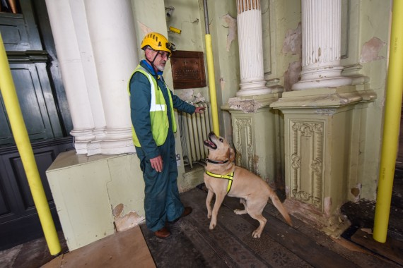 dog sniffing out rot in historic building