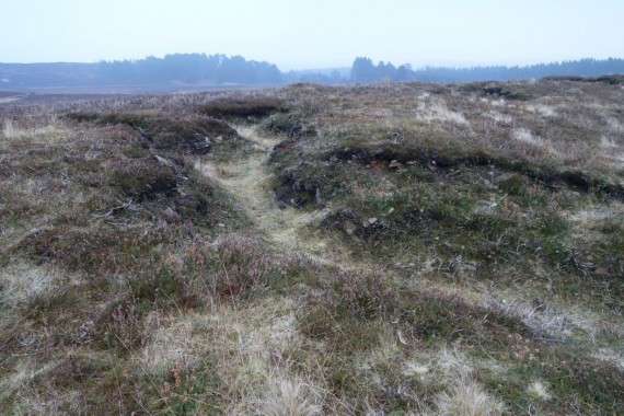 heather moorland showing historic ww1 trenches
